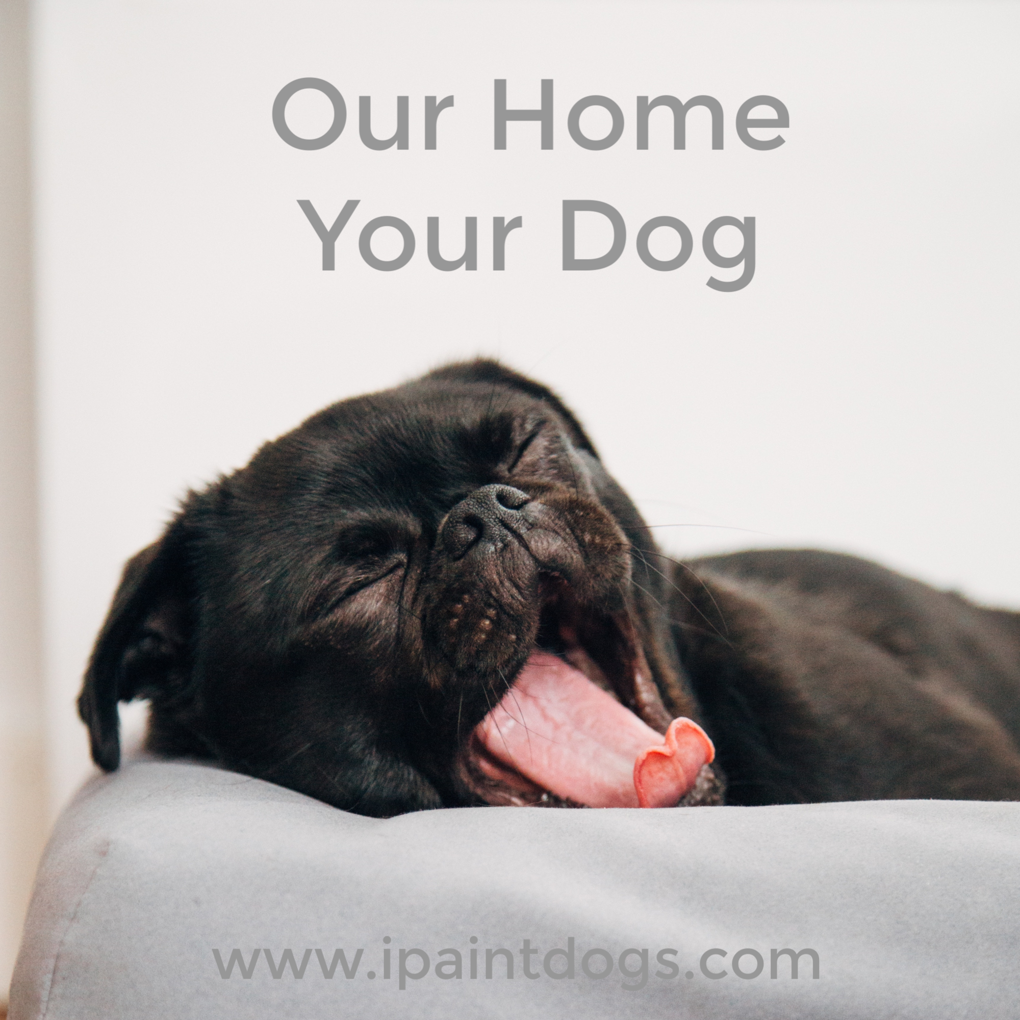 Our Home Your Dog, Samantha Barnes is ipaintdogs.com
