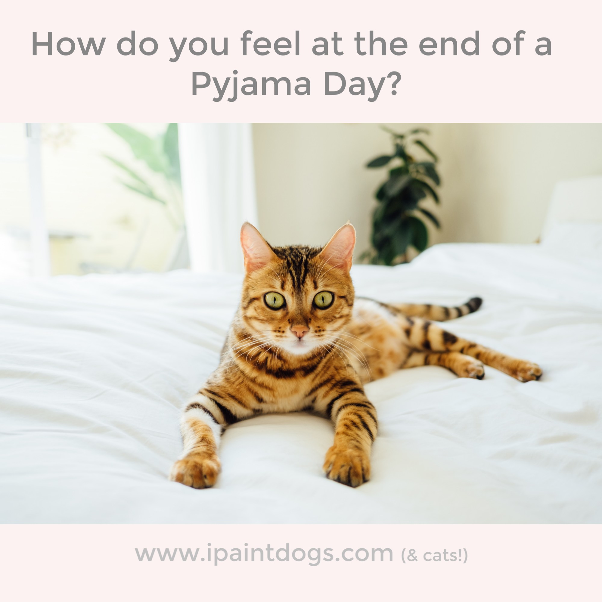 How do you feel at the end of a pyjama day?  samantha barnes is ipaintdogs.com