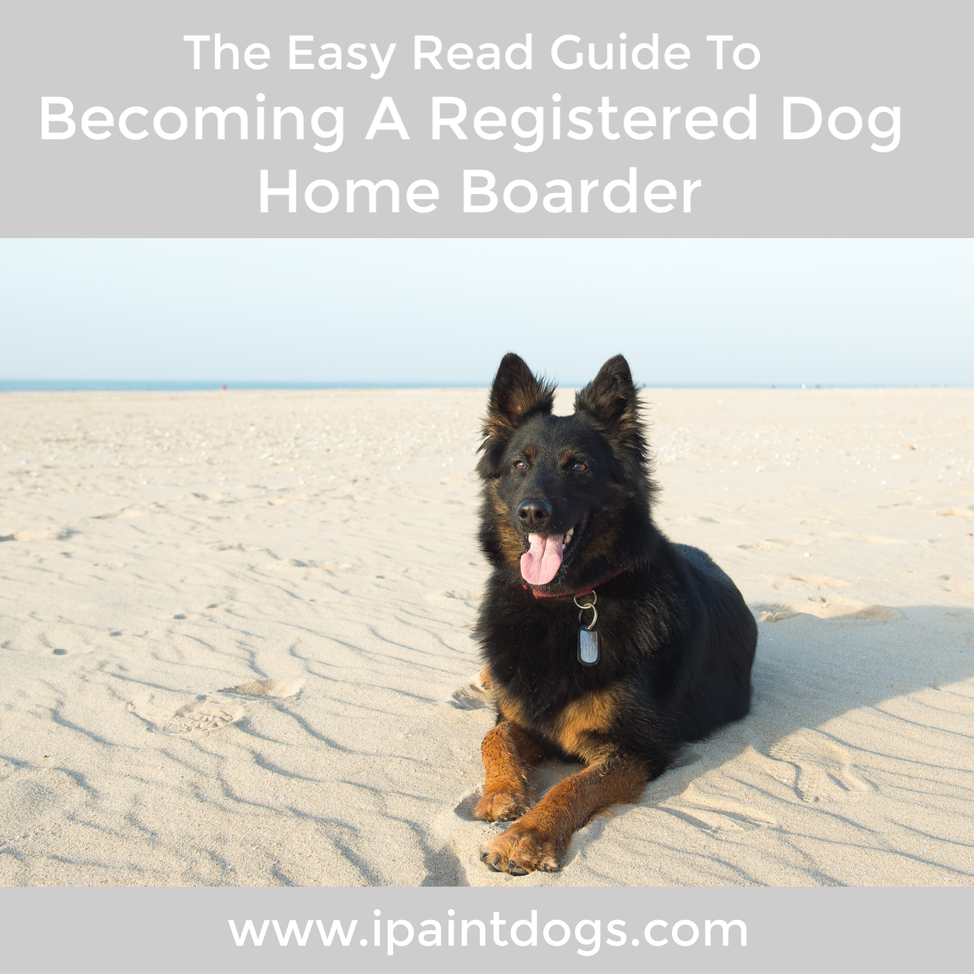 The Easy Read Guide To Becoming A Registered Dog Home Boarder by Samantha Barnes, ipaintdogs.com