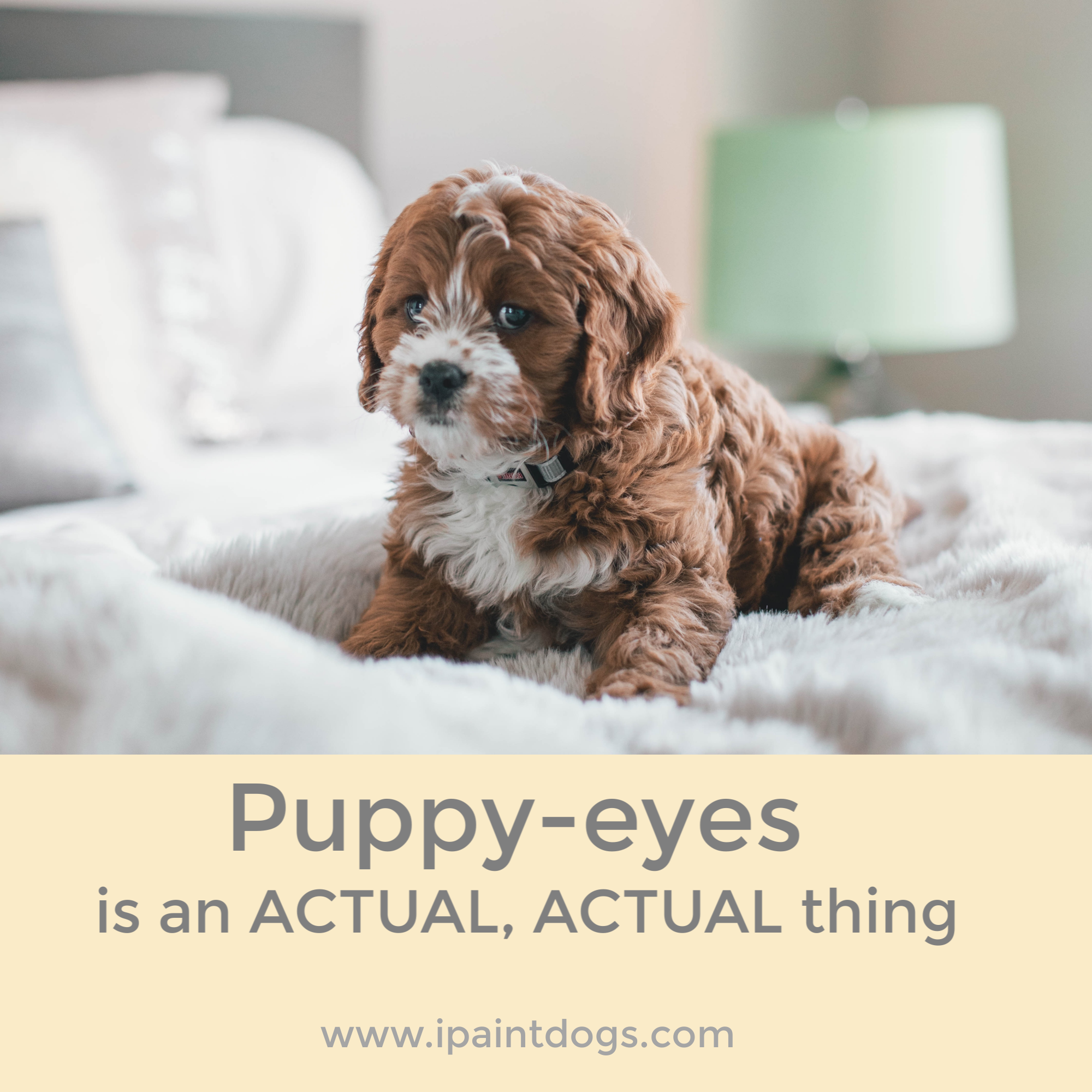 Puppy Eyes is an actual thing, human canine bonding by ipaintdogs.com