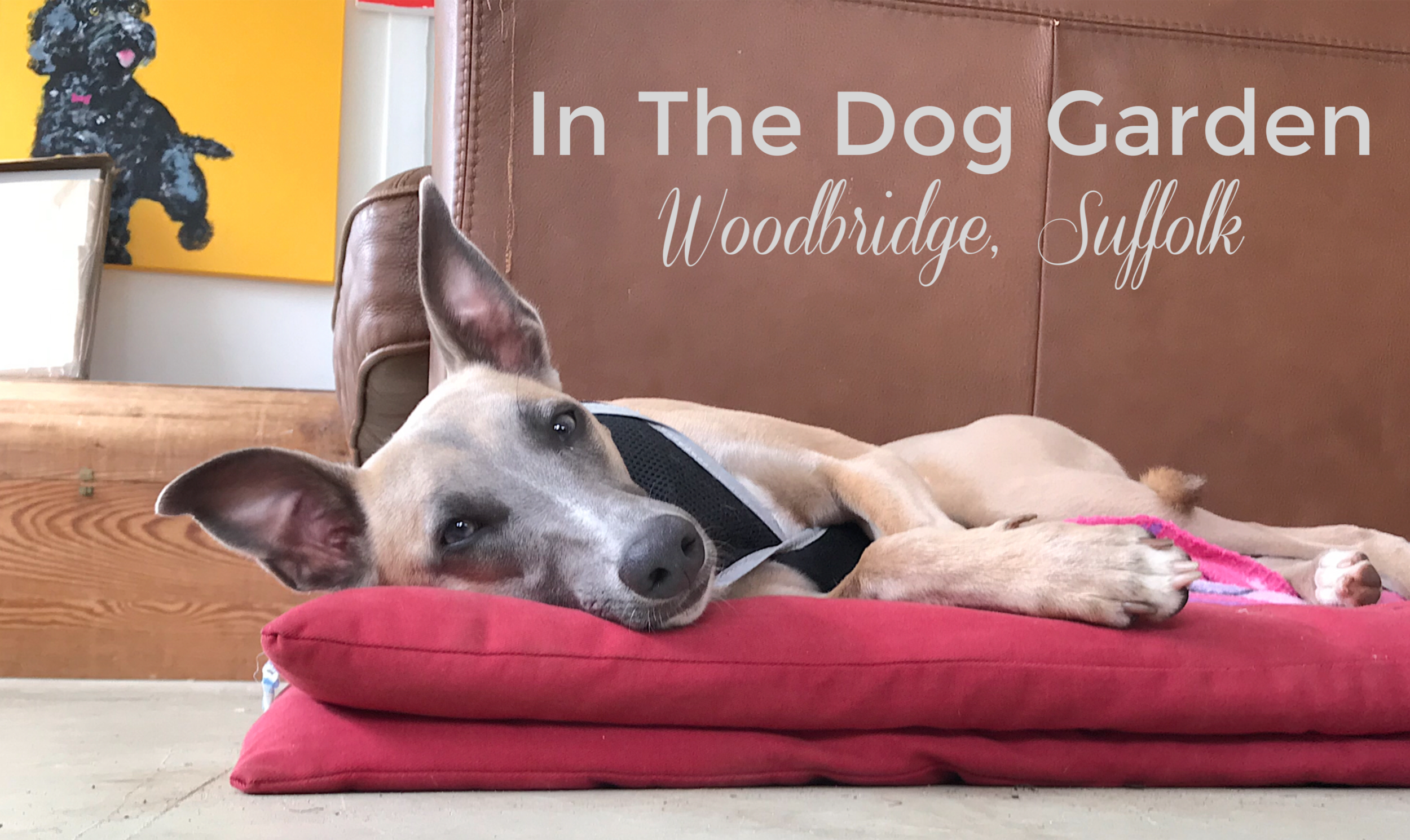 The Dog Garden, Woodbridge, Suffolk Dog Boarding