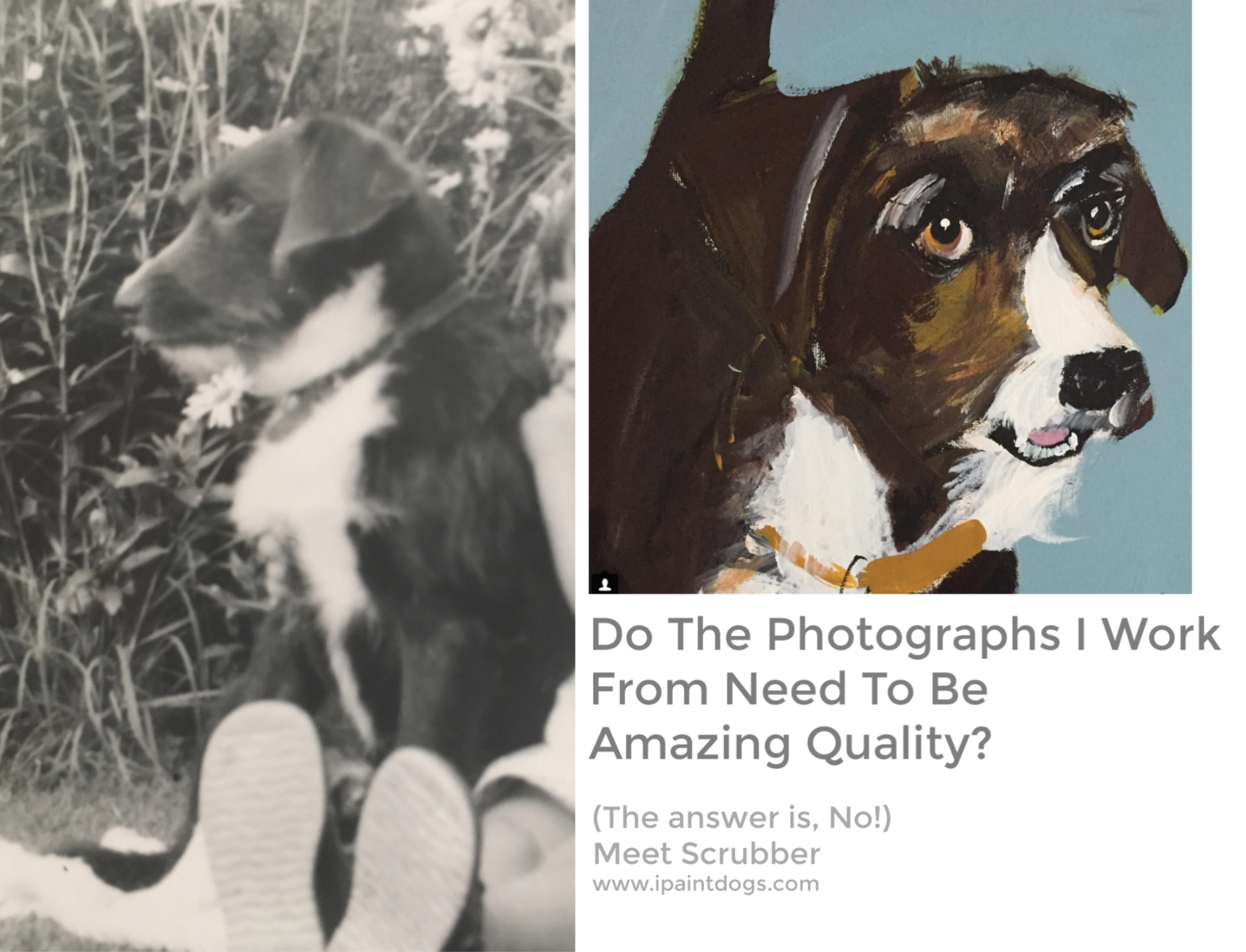 Do The Photographs I work from need to be amazing quality?  No!  ipaintdogs.com