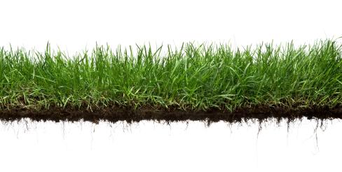 Grassroots Development & Management