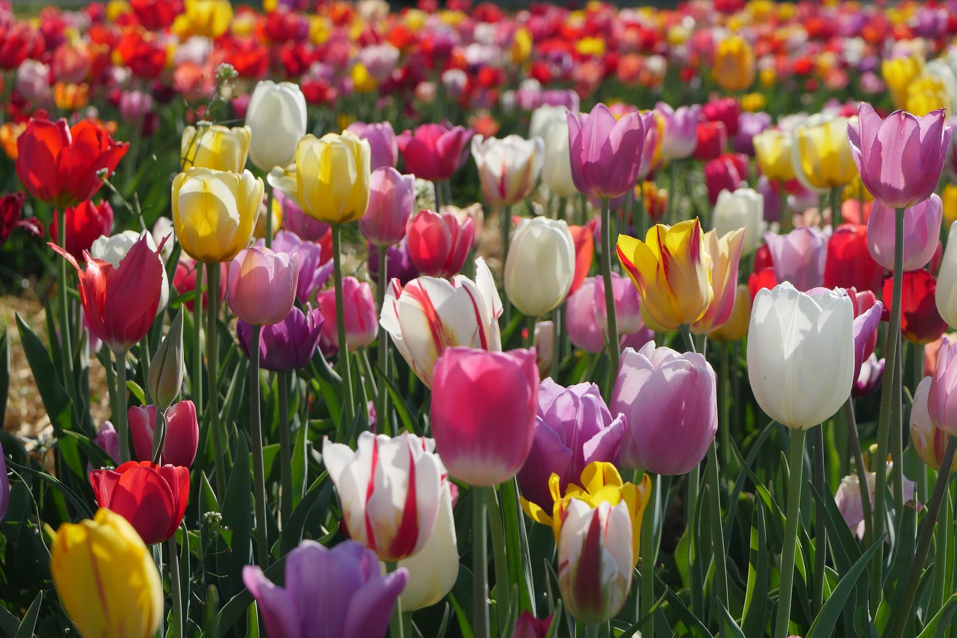 flower-3365598_1920.jpg