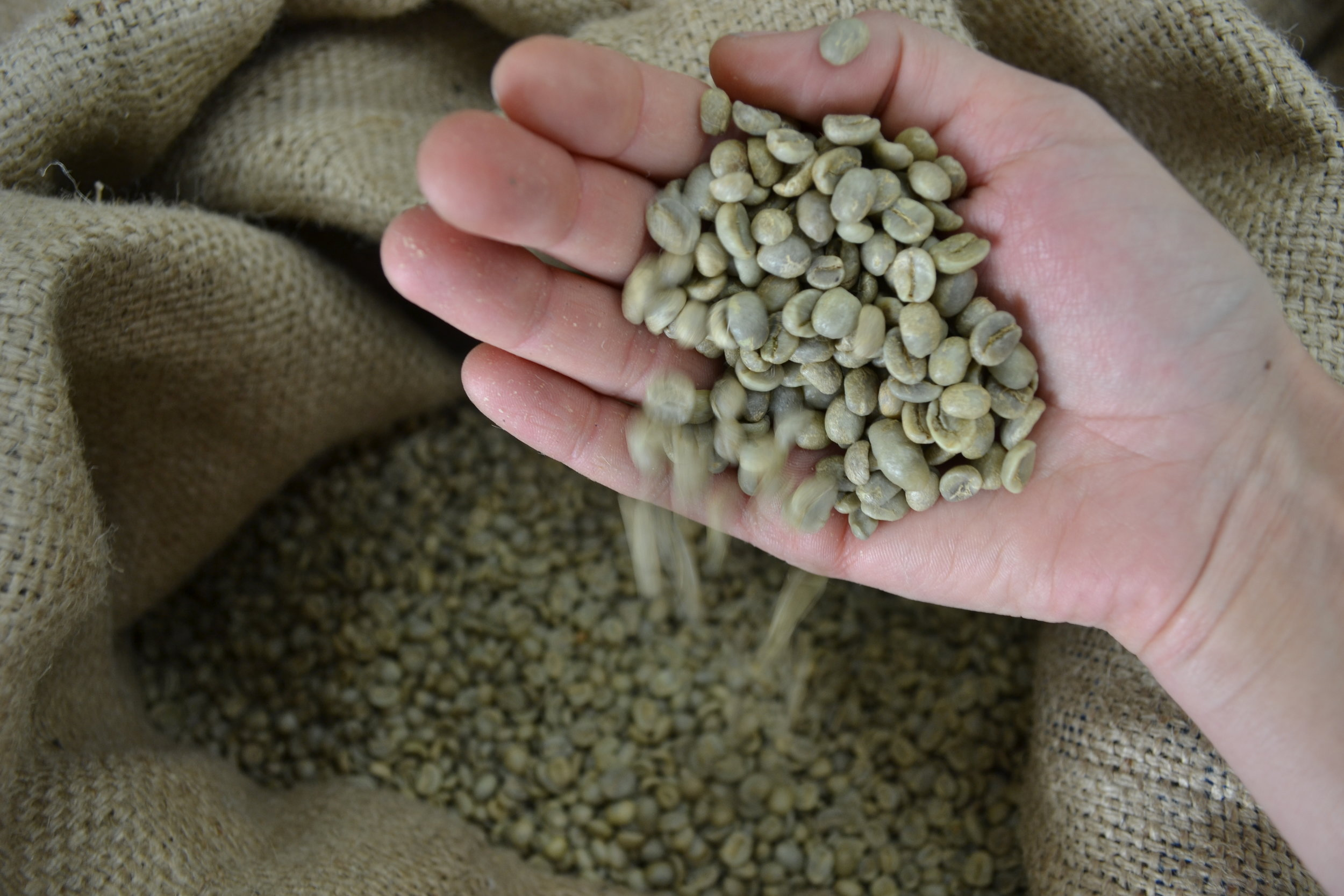PURCHASE BEANS -