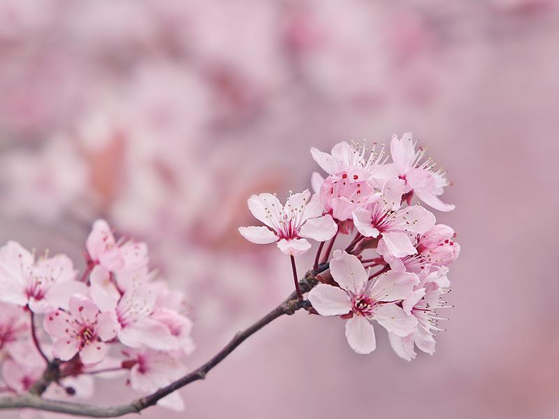2_SpringClean.jpg