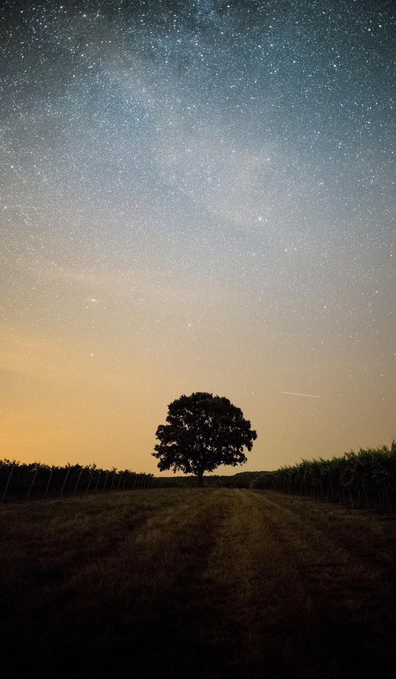 Méditation sonore de groupe - Pour continuer avec ce flux d'énergie positive, vous pourrez vous détendre dans cet environnement sûr et stimulant. Guider par des sons, des odeurs, vos sens en éveil, vous serez emporté dans un voyage révélateur, libérant votre esprit, stimulant votre corps physique, et vous permettant de faire une pause et vous connecter avec vous même.Des méditations seront proposées au coucher du soleil, si le temps le permet.