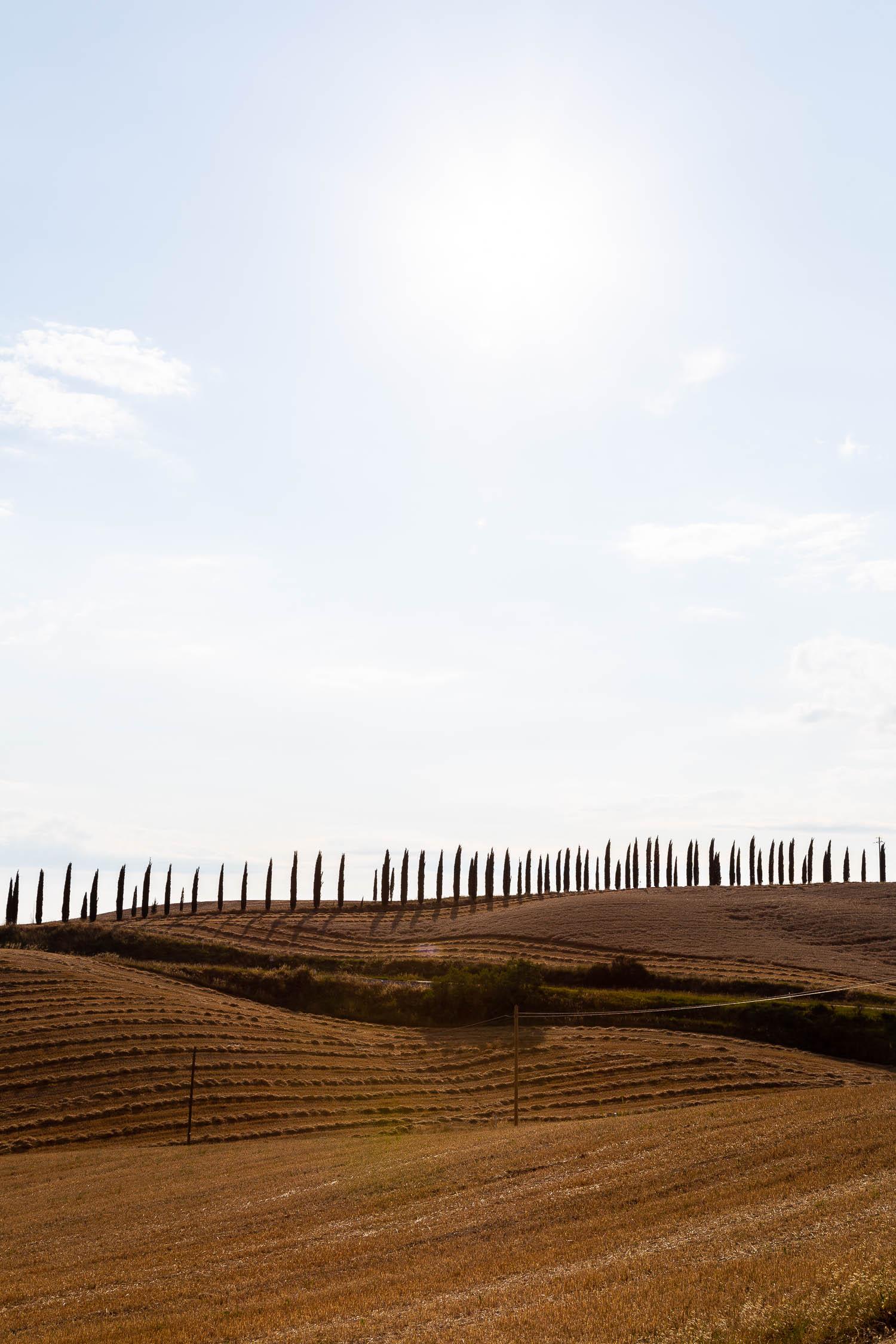 Tuscany-cypresses-on-the-horizon-5291.jpg