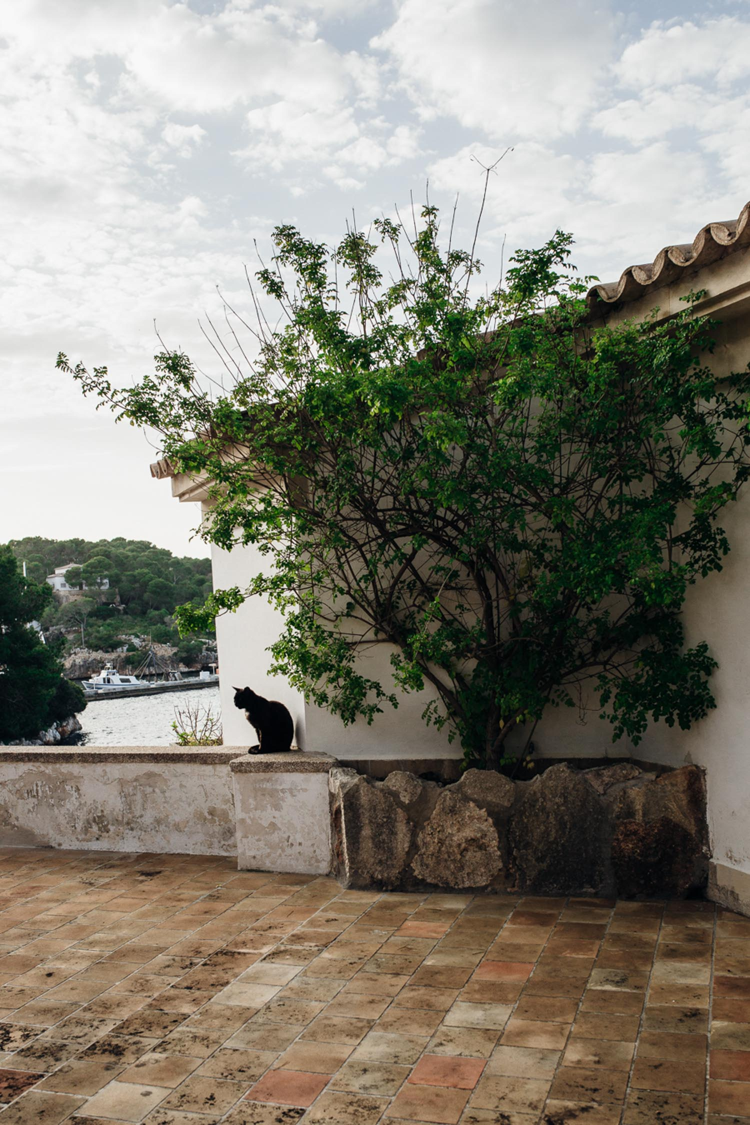 Cala-figuera-cat-on-wall-Mallorca-1526.jpg