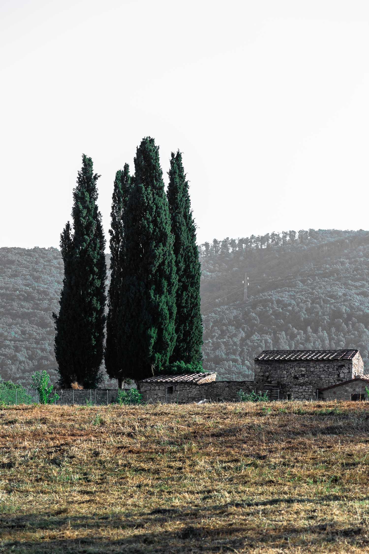 Tuscany-cypresses-landscape-4233.jpg