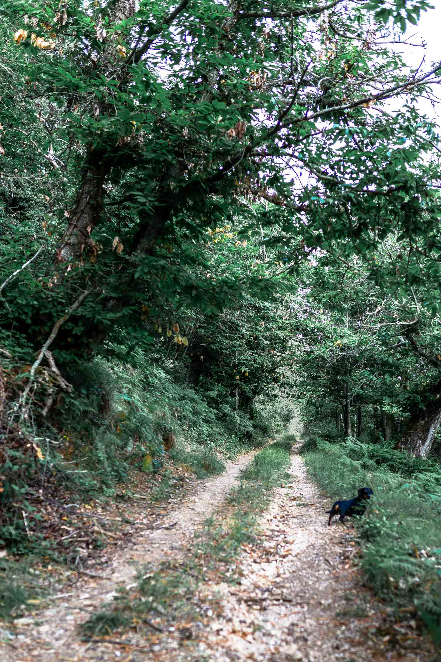 Tuscany-country-road-4272.jpg