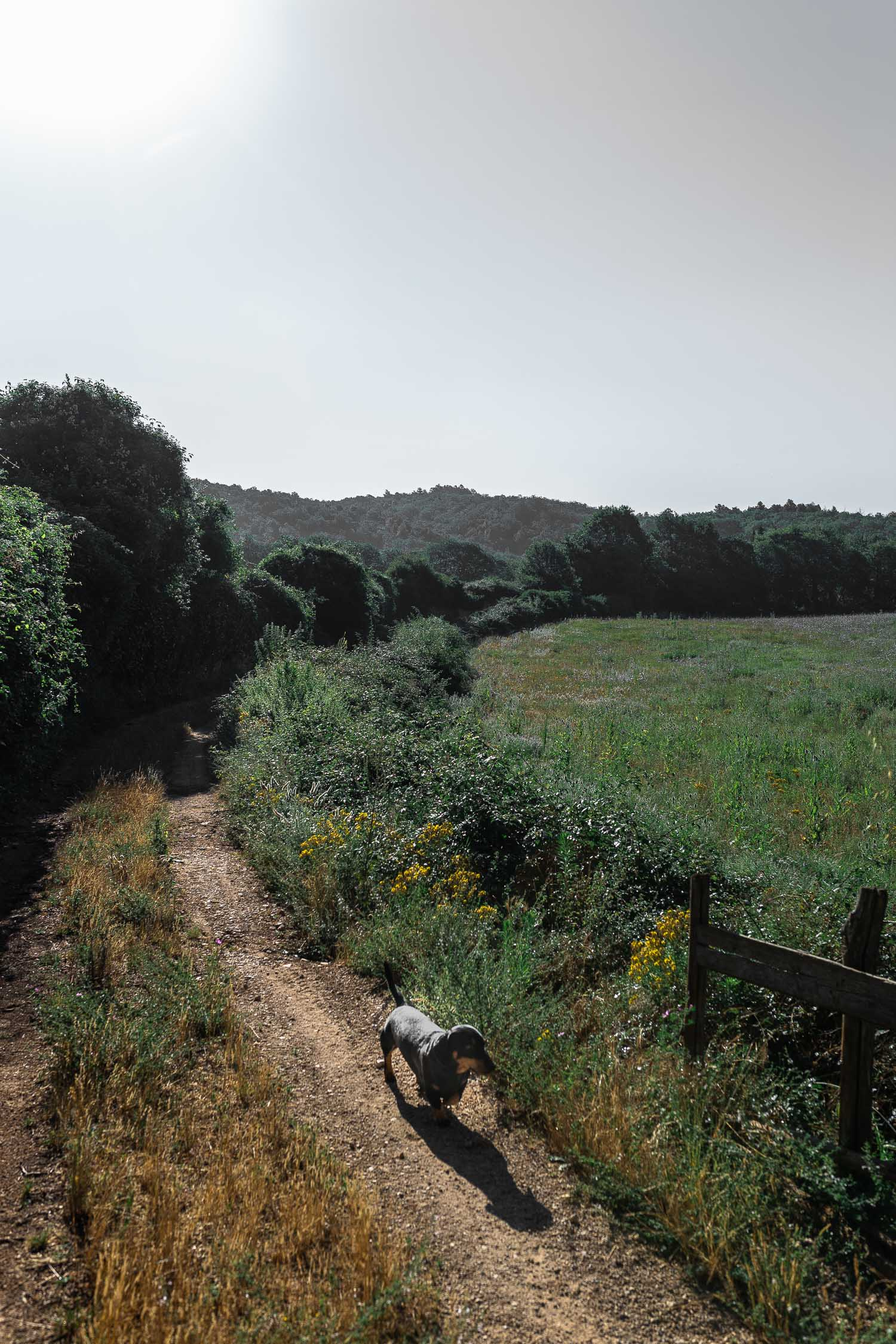 Tuscany-country-road-dog-walk-4433.jpg