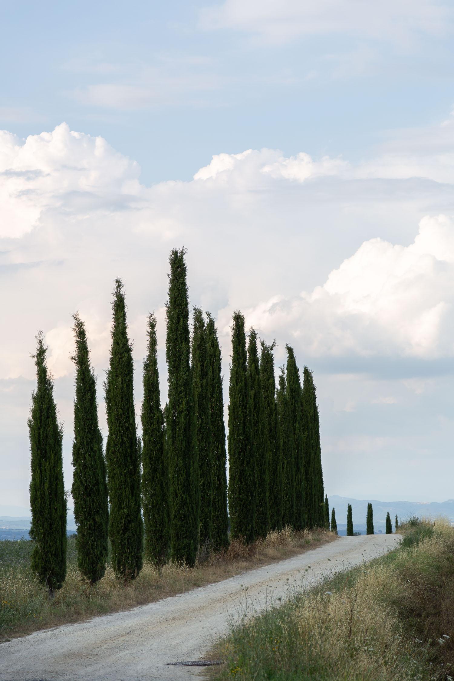 Tuscany-cypresses-5299.jpg