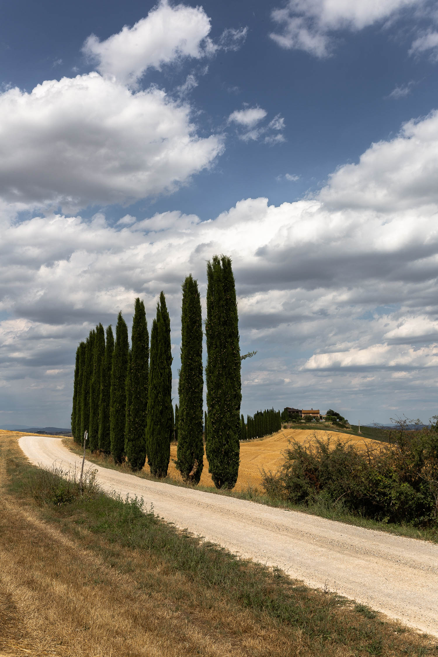 Tuscany-winding-road-and-cypresses-4920.jpg