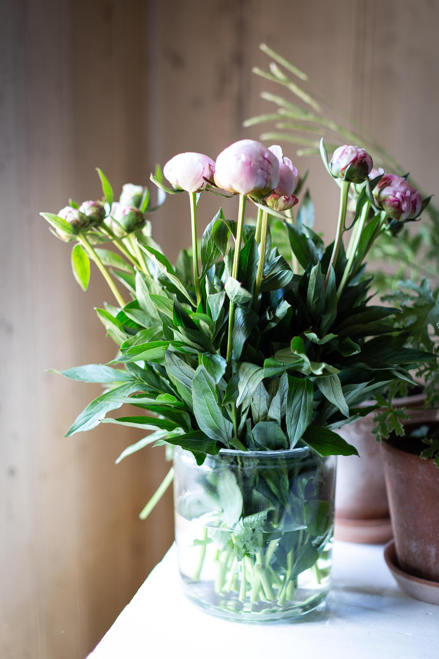 Norway-peonies-vase-2098.jpg
