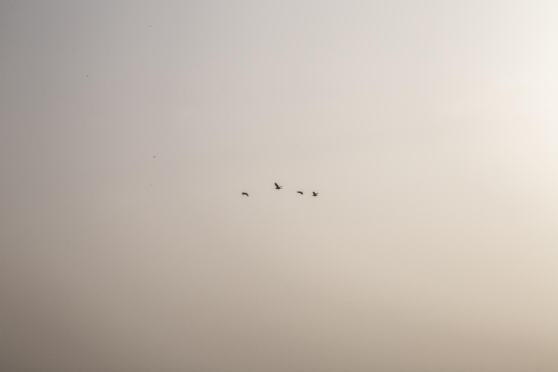 Egypt-0775.jpg