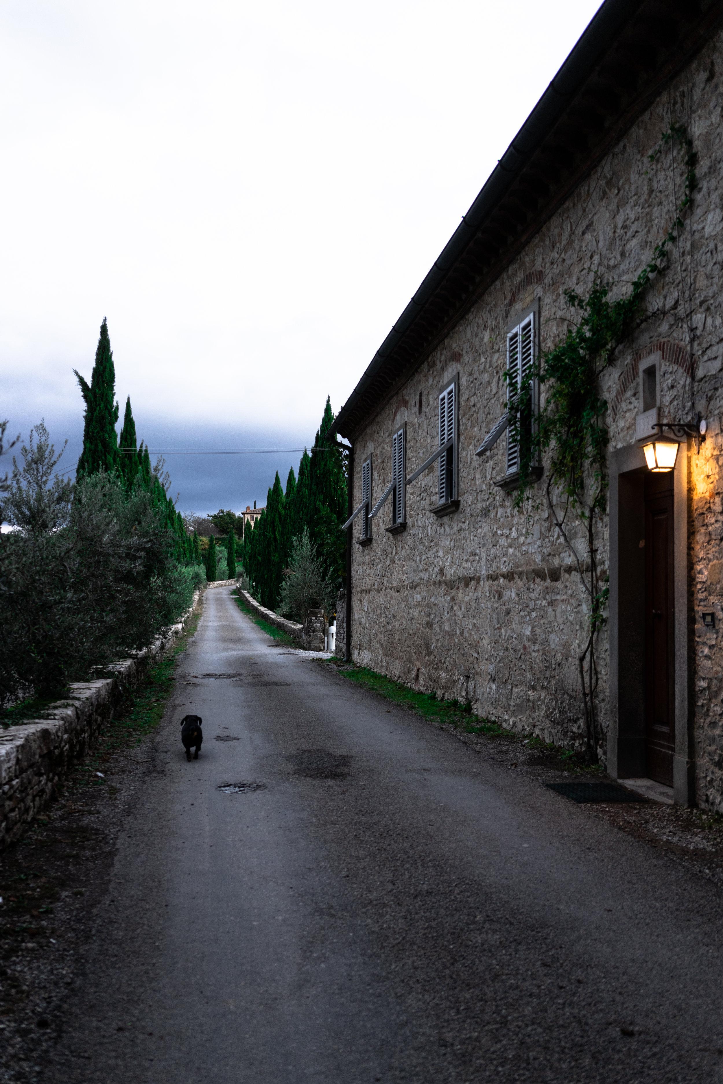 Evening walk at Castello di Meleto