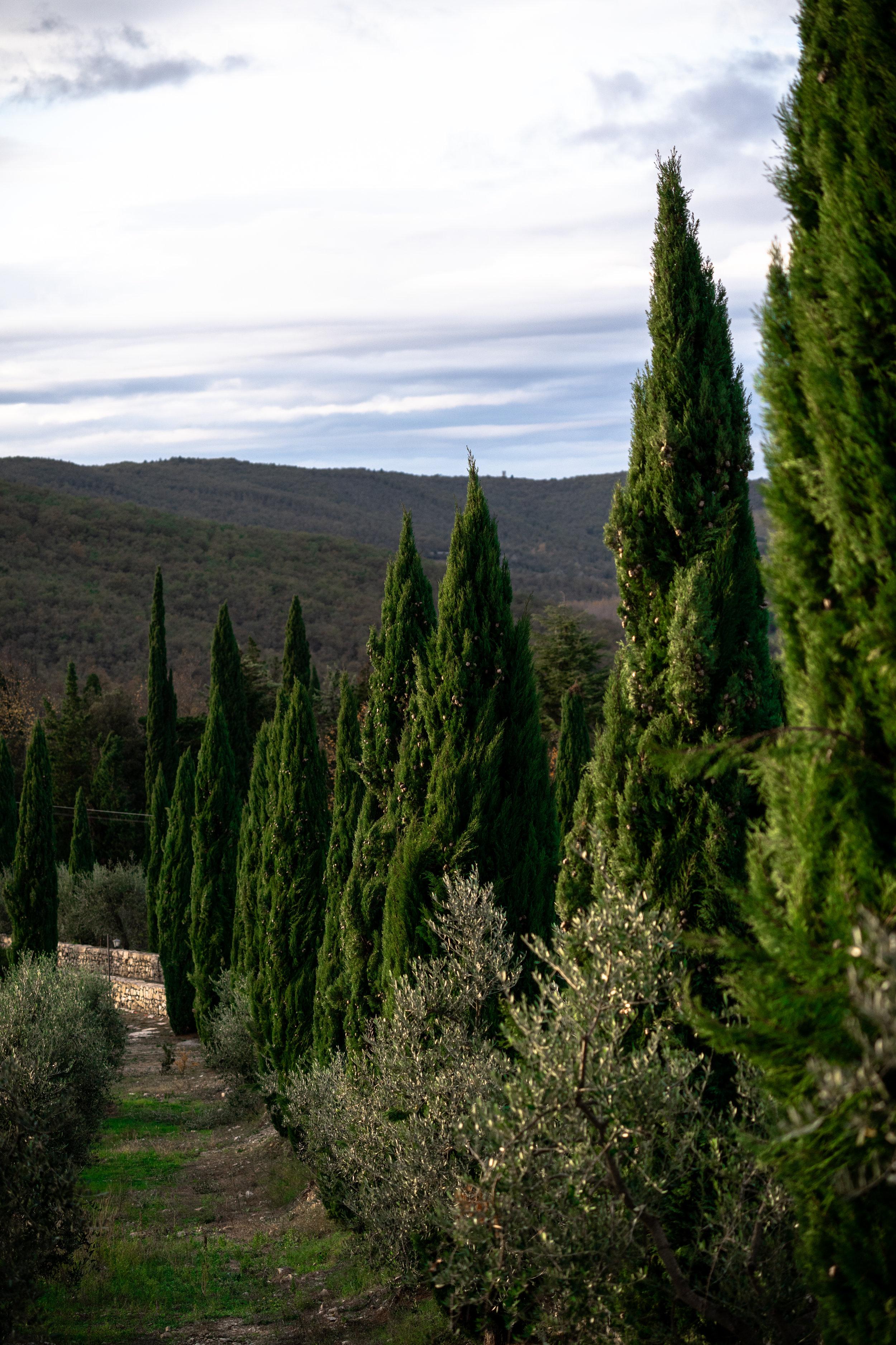 Cypress Avenue at Castello di Meleto