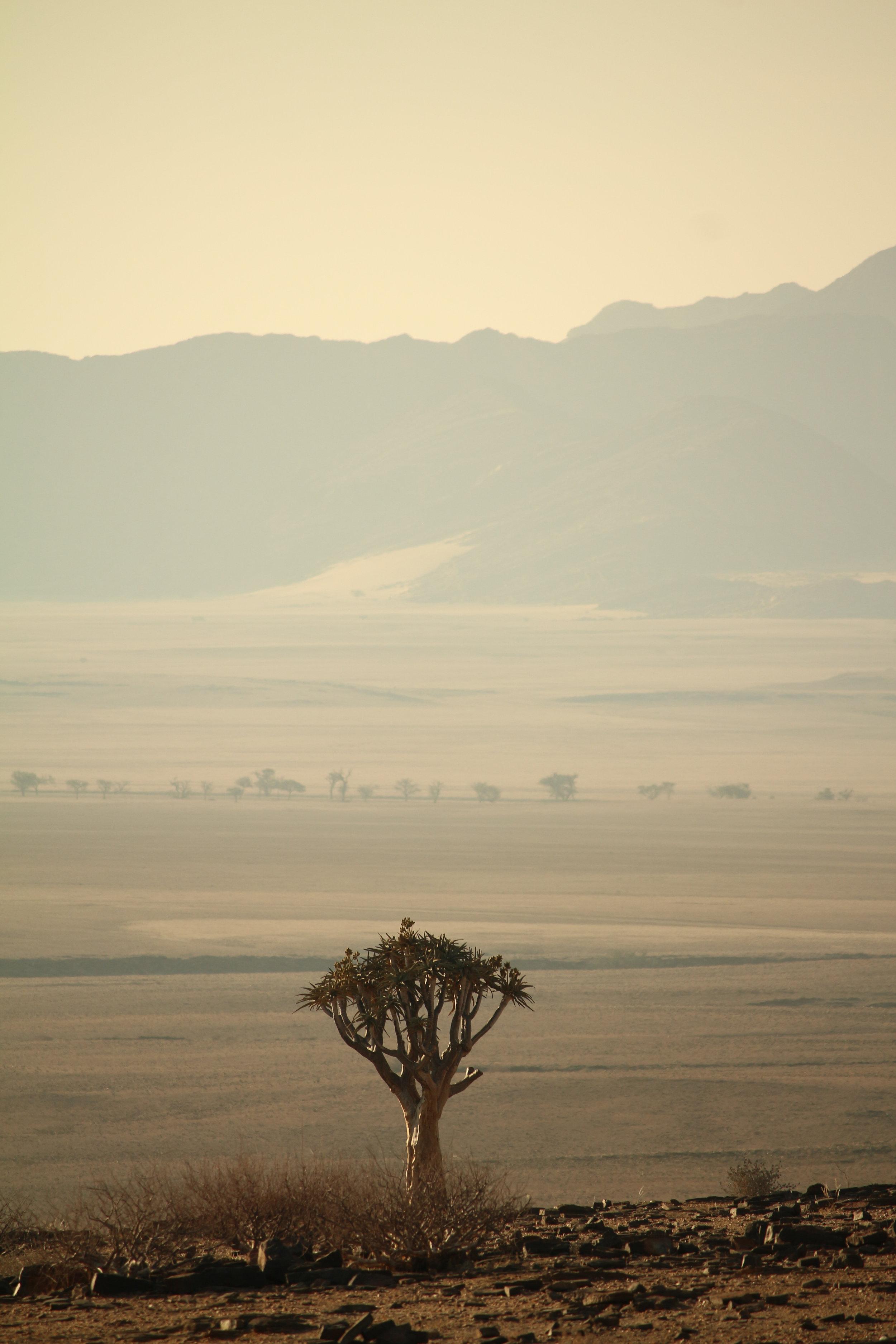 Köcherbaum Namibia