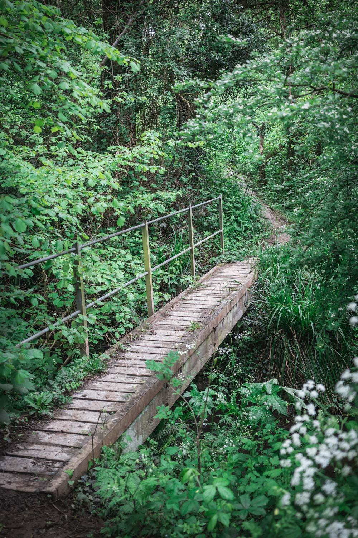 Bridge-on-a-country-walk-in-Kent-06347.jpg