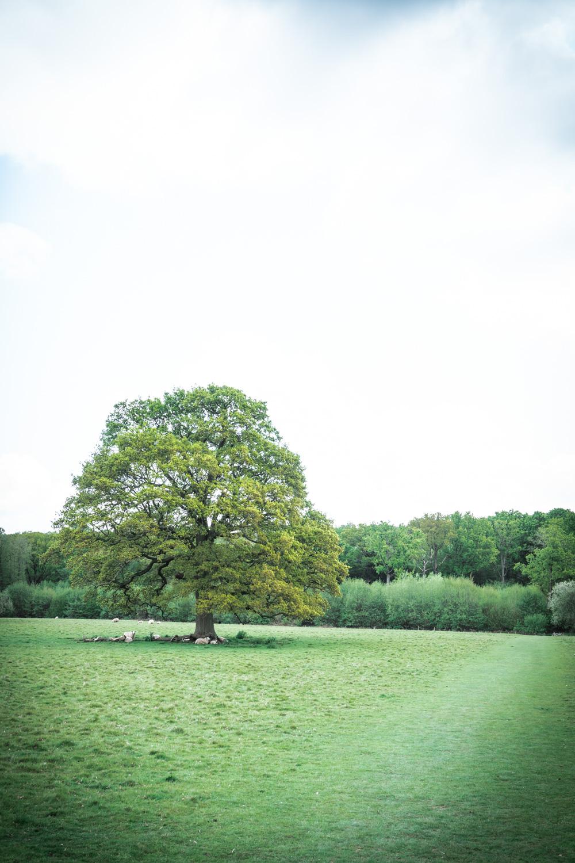 Oak-tree-in-the-field-100-acre-wood.jpg