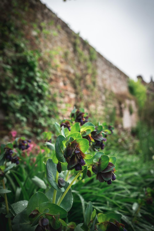 Sissinghurst-Castle-plant-collection.jpg