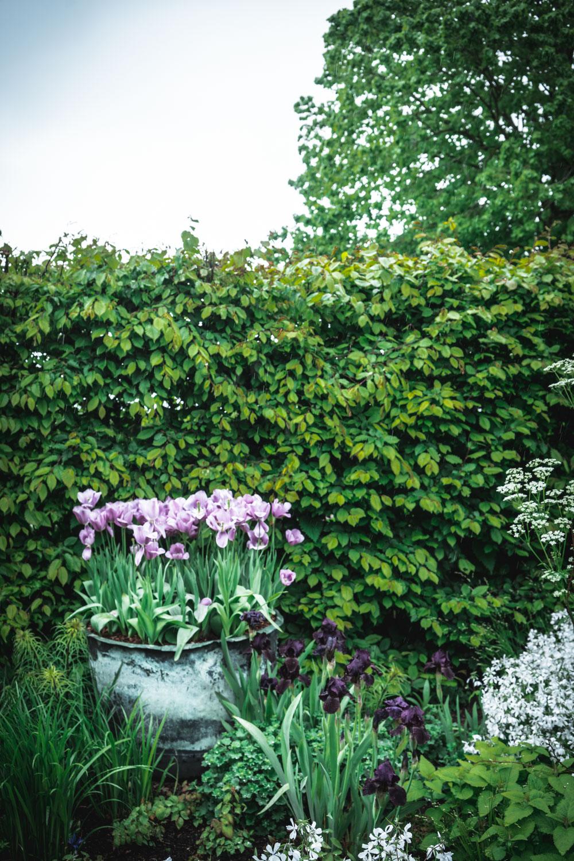 Sissinghurst-Castle-Flower-Pots.jpg