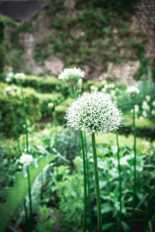 Sissinghurst-Castle-The-White-Garden.jpg