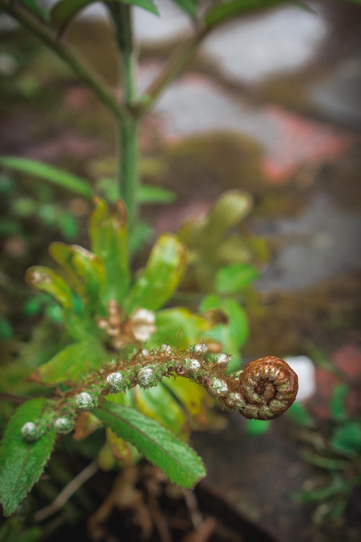 Sissinghurst-Castle-Unsual-Plants.jpg