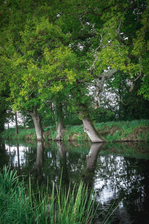 Sissinghurst-Castle-the-Pond.jpg