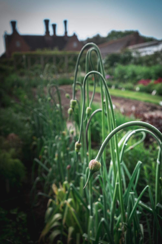 Sissinghurst-Castle-the-vegetable-garden.jpg