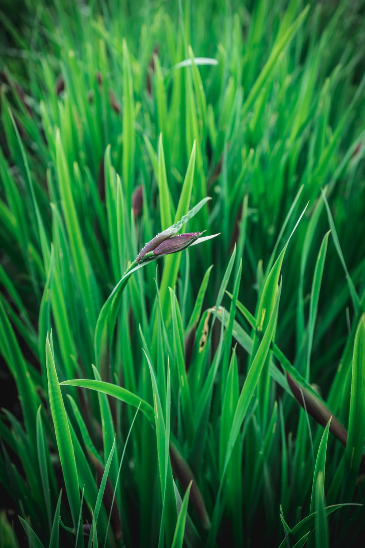 Sissinghurst-Castle-grass-detail.jpg