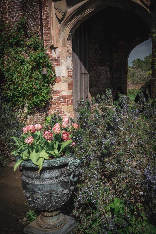 Sissinghurst-Castle-pink-tulips-pot.jpg