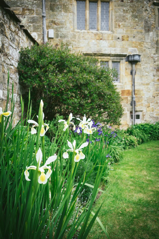 Bateman's-Manor-Rudyard-Kipling-white-lilies.jpg