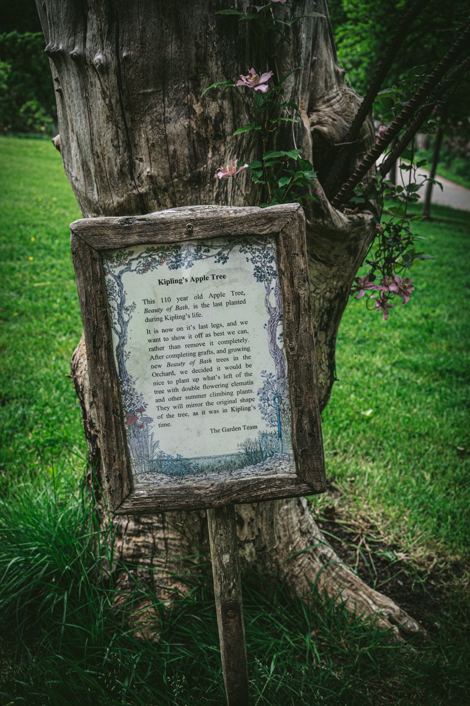 Bateman's-Manor-Rudyard-Kipling-Apple-Tree.jpg