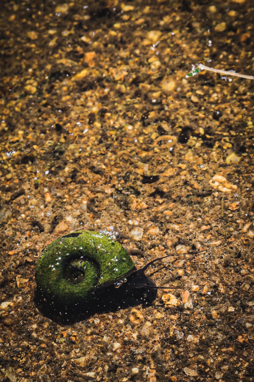 Monk's house-water-snails.jpg