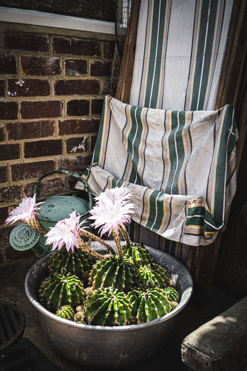 Monk's house-cacti-in-the-conservatory.jpg
