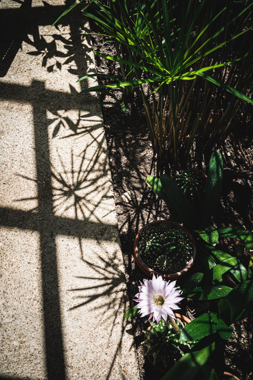 Monk's house-cacti-flowers.jpg