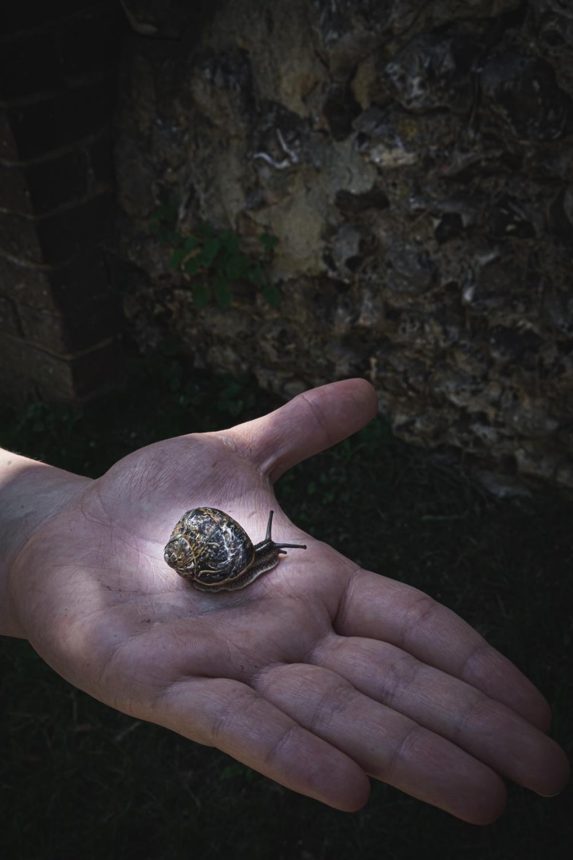 Monk's house-snail.jpg