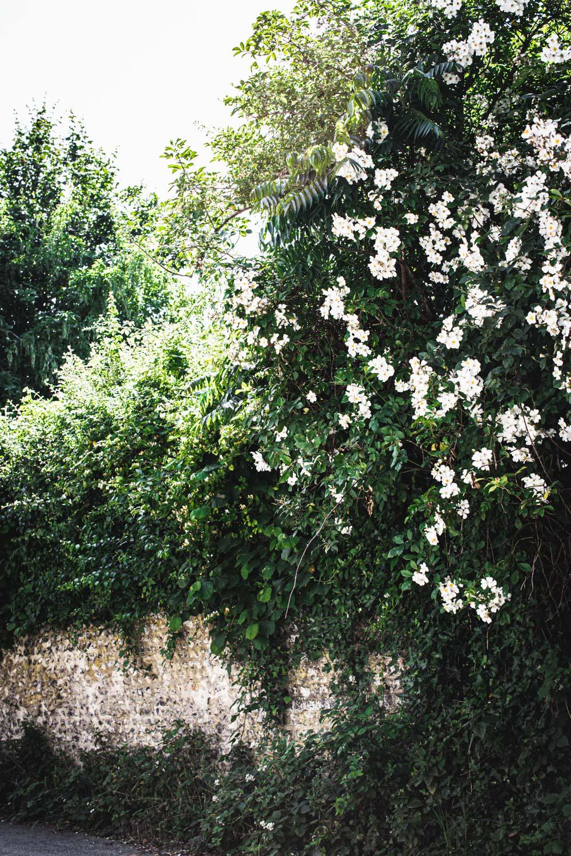 Monk's house-flowers.jpg