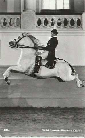 The  airs above the ground  or school jumps are a series of higher-level, Haute ecole, classical dressage movements in which the horse leaves the  ground . They include the capriole, the courbette, the mezair, the croupade and the levade.