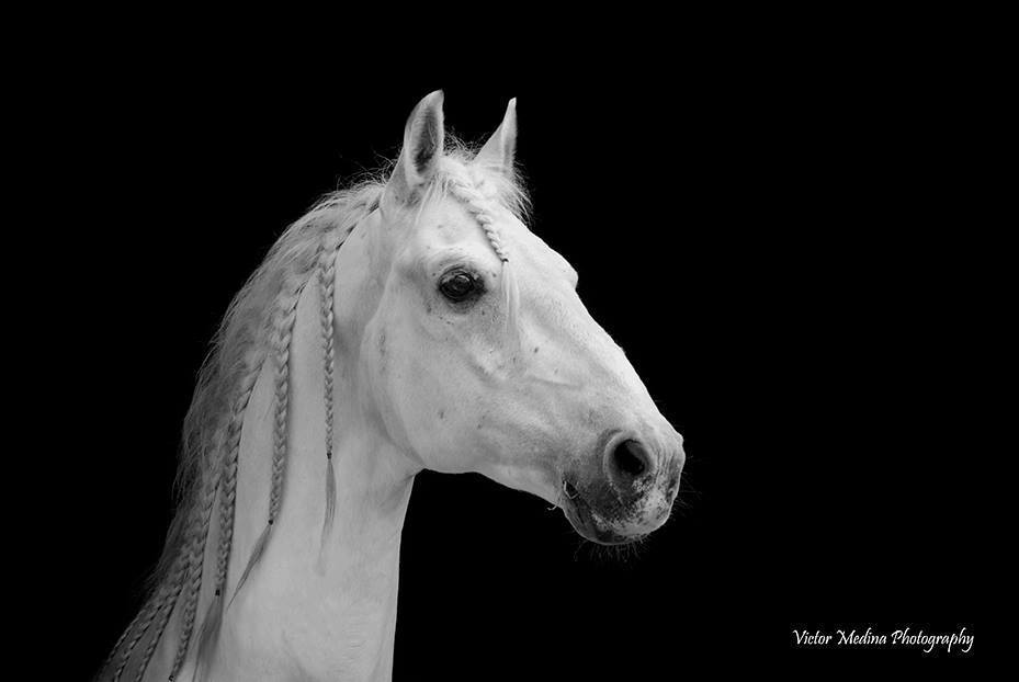 Favory Canada owned by Kate Phillips  Photo Credit: Victor Medina Photography