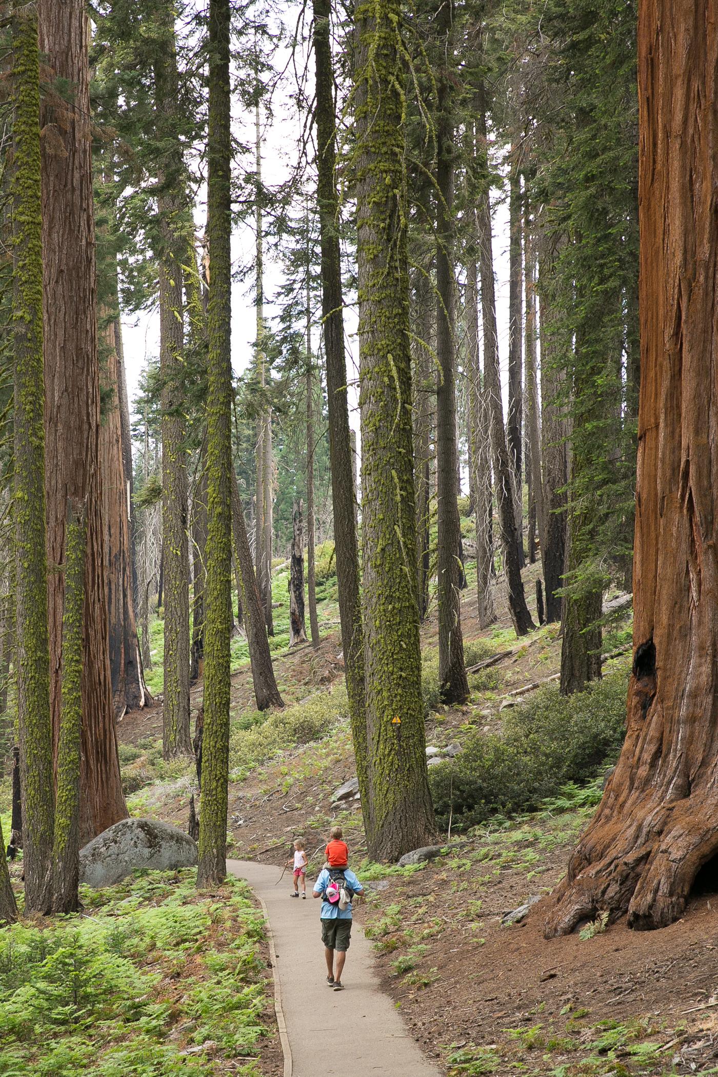 sequoias2017 (1 of 1)-3.jpg