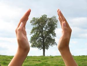 Tree in hand 2.jpg