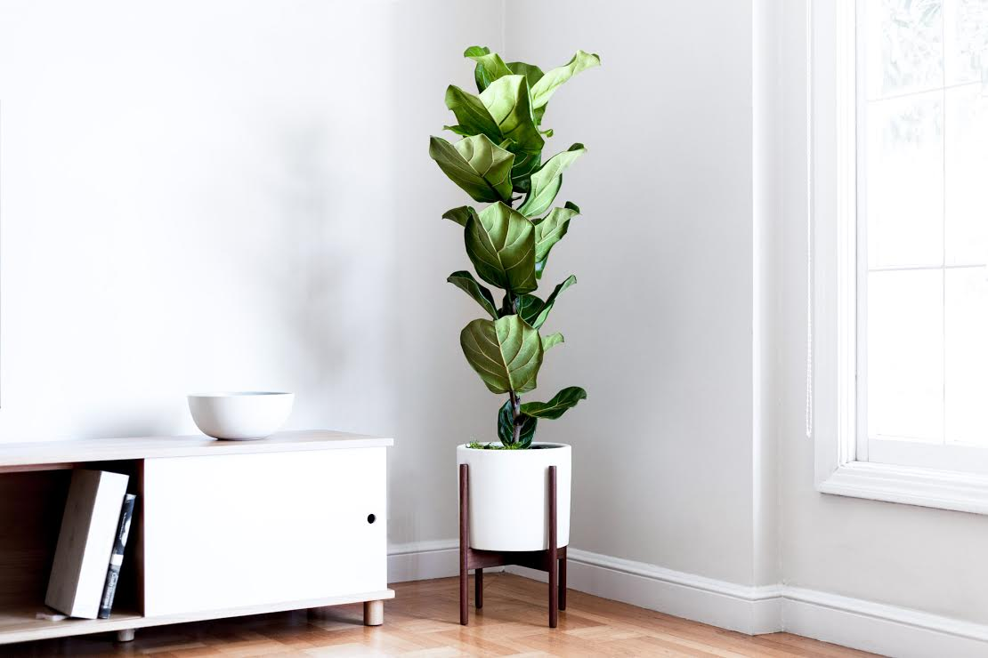 9 Indoor Plants to Freshen Up Your Home
