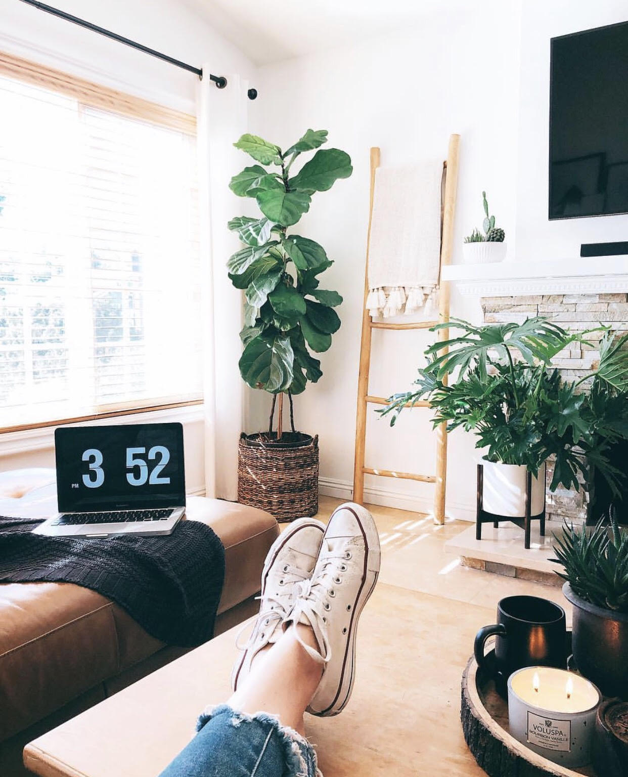 9 Indoor Plants to Freshen up Your Home -