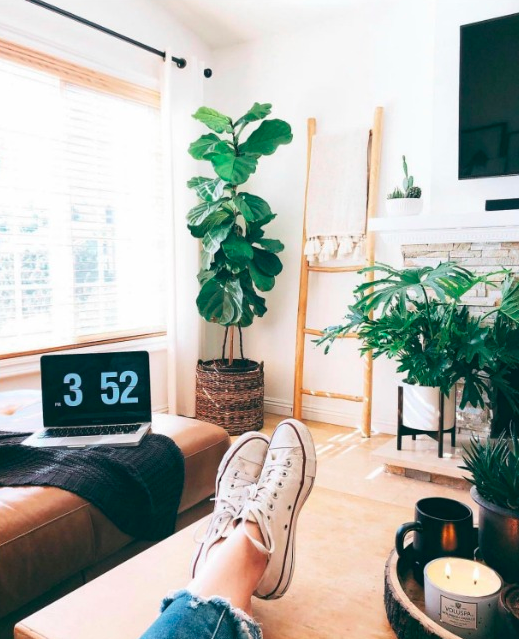 9 Indoor Plants to Freshen up Your Home - Home and Garden