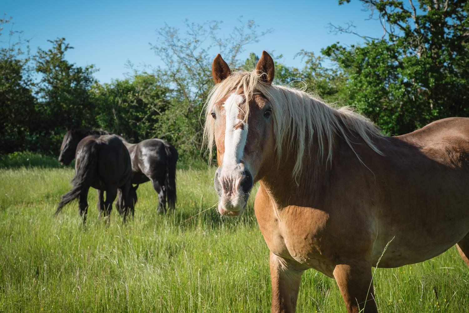 Horses restoring your true potential    Private   Group   Corporate