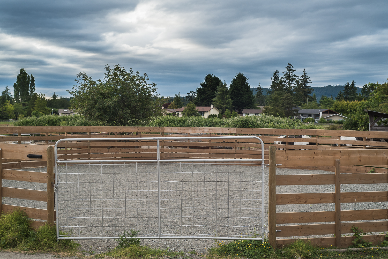 horse-wisdom-farm-43.jpg