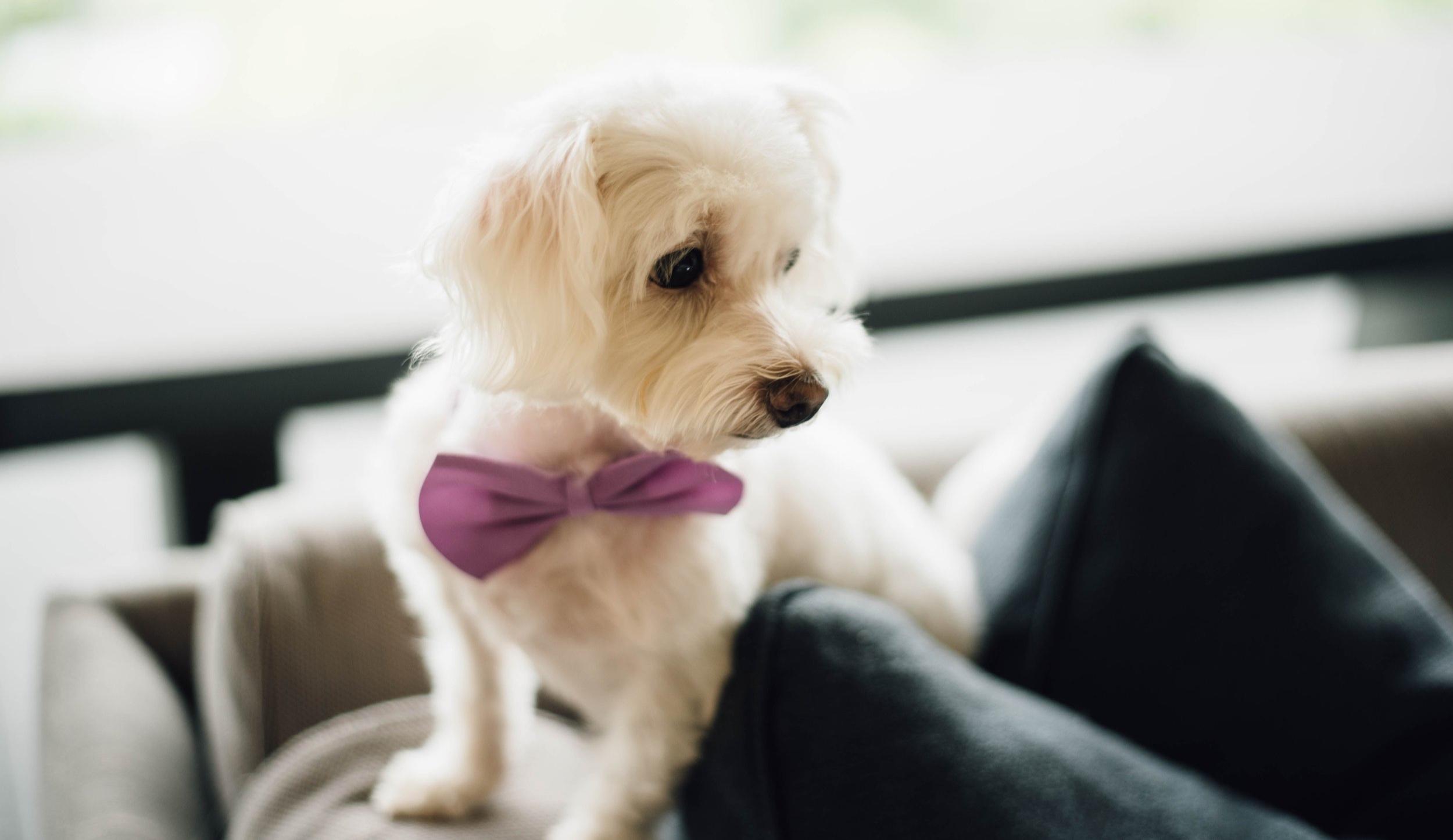 wedding+dog.jpg